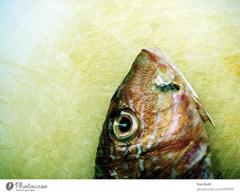 fishhead Feed Captured Catch Ocean Lake Breathe Motionless Red Glittering Fishy Slimy Fisherman Nutrition Eyes eye Death dead Wooden board gill Blue Mouth