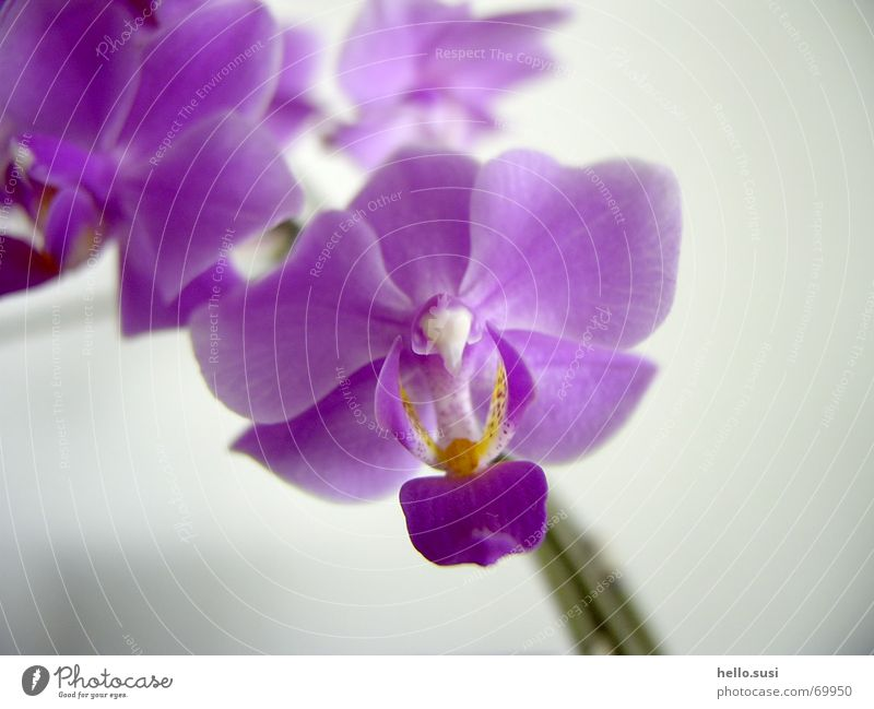 orchid Flower Orchid Violet Blossom Nature risp Close-up Digital photography