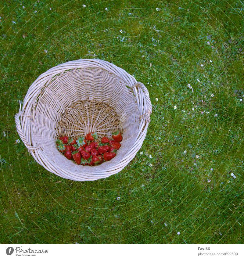 Green Red Flower Spring Grass Happy Healthy Fruit Fresh Organic produce Juicy Diet Basket Strawberry Vegetarian diet Plaited