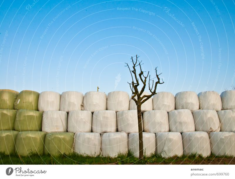 Sky Nature Blue Tree Spring Gray Beautiful weather Agriculture Cloudless sky Harvest Hay Hay bale Plastic Sheeting