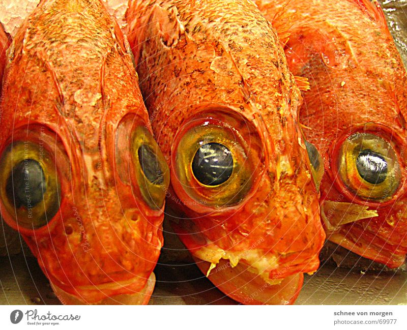 Attentive Eyes Seafood Fish market Basque Country Bilbao Looking Spain Smoothness Fresh Silent Watchfulness Vacation & Travel Europe Coast Watercraft Grief