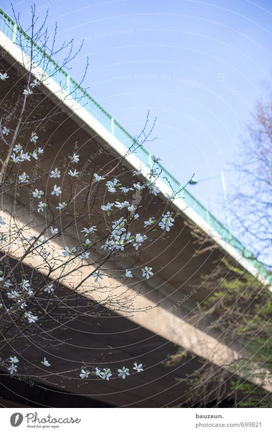 You're gonna get flowers in front of a bridge. Environment Sky Cloudless sky Spring Beautiful weather Plant Tree Blossom Park Town Bridge Street Overpass