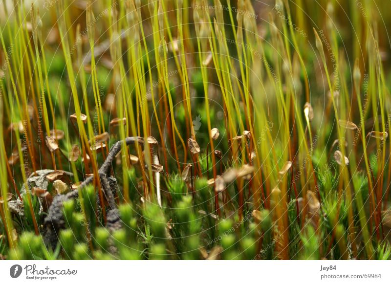 moss forest Meadow Herbs and spices Nature flat focal plane depth blur Detail