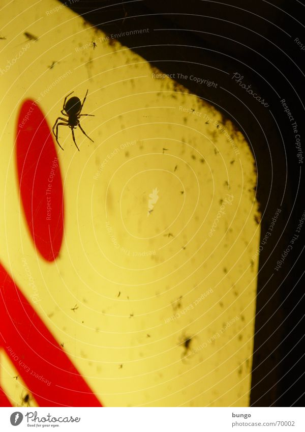 Red Legs Fear Dirty Flying Advertising Disgust Panic Spider Neon light Spider's web Mosquitos Neon sign Neon lamp