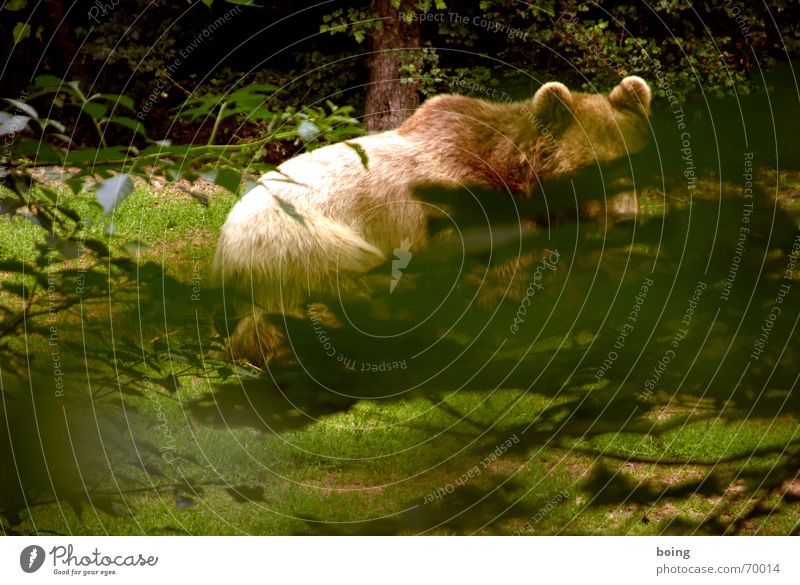 Nature Animal Forest Weather Dangerous Threat Point Pelt Hunting Hide Captured Mammal Circus Bear Hunter Hiding place
