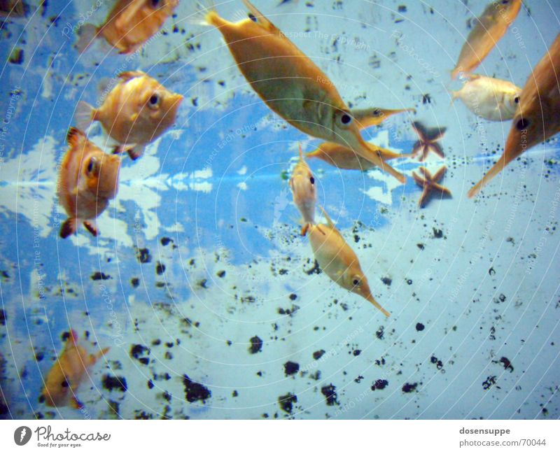 Fishpond Flush Aquarium Lake Pond Cyan Transparent Goldfish Background picture Wet Comforting Dive Under Smoothness Slowly Ocean Water Clarity Blue Eyes