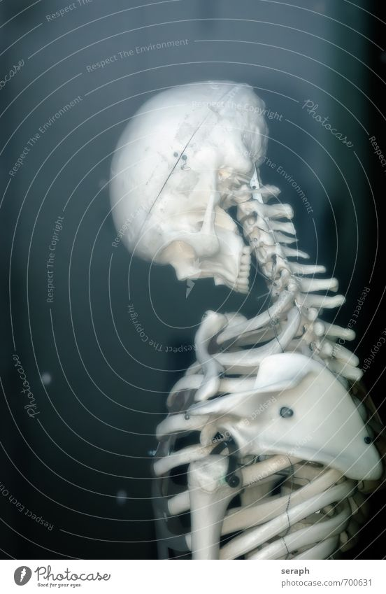 Skeleton Human being Life Death Head Health care Fear Body Stand End Chest Hallowe'en Corpse Horror Anatomy Death's head