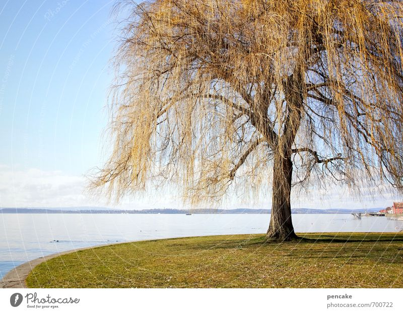 springtime parametta Nature Landscape Spring Park Lakeside Lake Constance Sign Esthetic Weeping willow Tinsel Golden yellow Tree Individual Colour photo