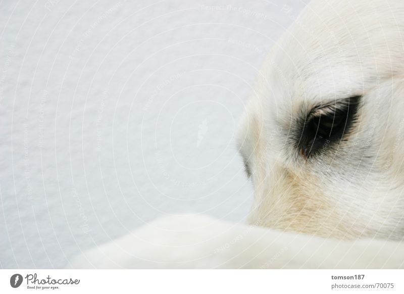 White Animal Dog Think Moody Humanity