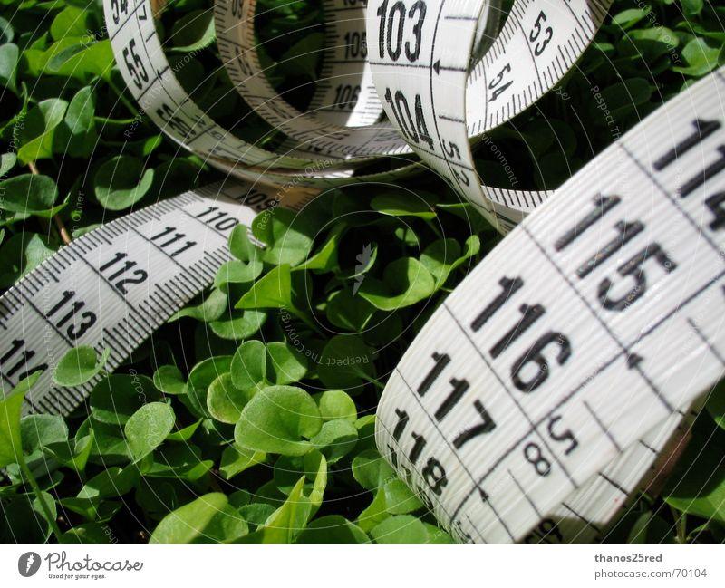 measuring nature Clever Nature Trifili measure grass mezoura xorto