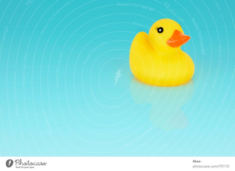 Duck ass on the ground Rubber Yellow Turquoise Small Blue Bright Water Float in the water Swimming & Bathing Squeak duck Bright background Isolated Image