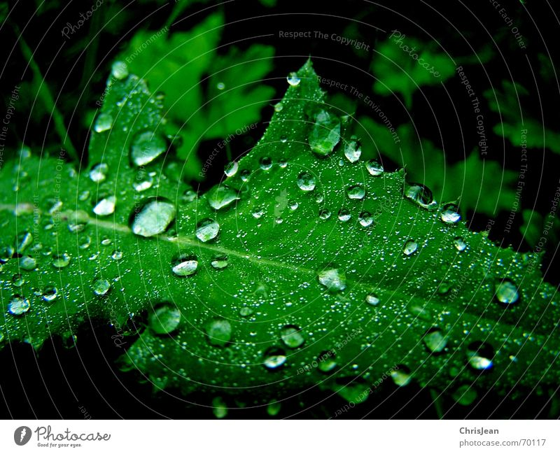 Nature Beautiful Green Water Leaf Calm Fresh Drops of water Wet Dew Partially visible Damp Section of image Leaf green Photosynthesis Hydrophobic