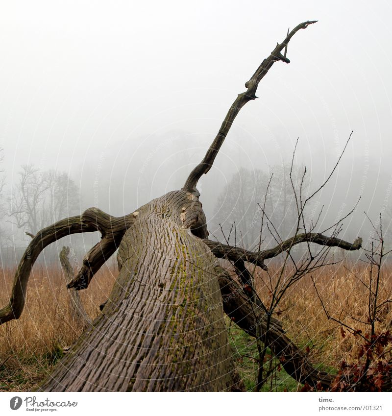 Nature Plant Tree Landscape Far-off places Dark Environment Meadow Time Exceptional Horizon Lie Fear Fog Threat Branch