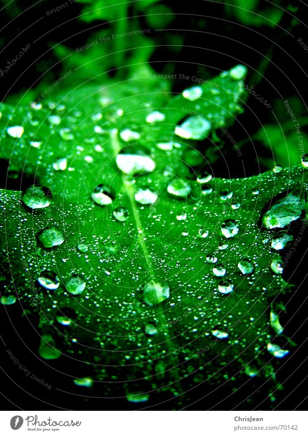 Nature Beautiful Green Water Leaf Calm Fresh Drops of water Wet Dew Partially visible Damp Section of image Leaf green Hydrophobic