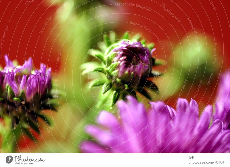 flowers ;) Flower Blossom Violet Green Red Plant Multicoloured Gaudy Still Life Joy Colour