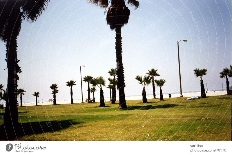 Beach Vacation & Travel Dream Coast USA Leisure and hobbies Palm tree California Los Angeles Malibu