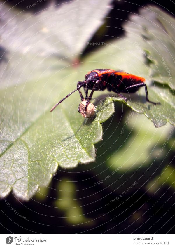 Nature Red Leaf Garden Spring Legs Wing Ball Insect Sphere Rotate Collection Coil Bow Plagues Bug