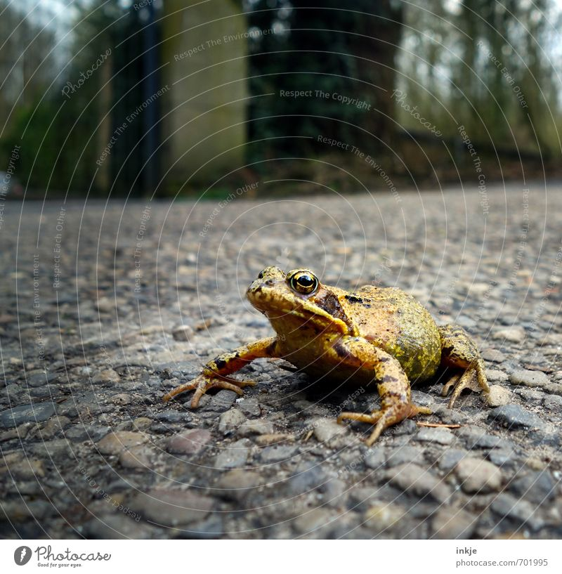 The enchanted prince, really. Environment Nature Spring Garden Park Transport Traffic infrastructure Street Lanes & trails Animal Wild animal Frog 1 Crouch