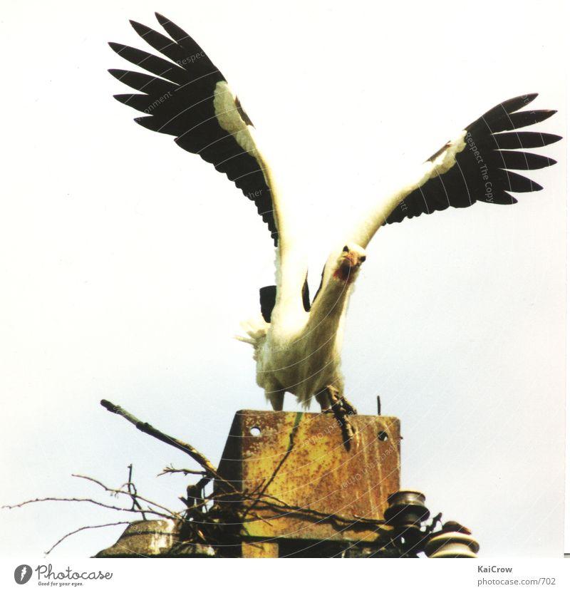Stork Eyrie