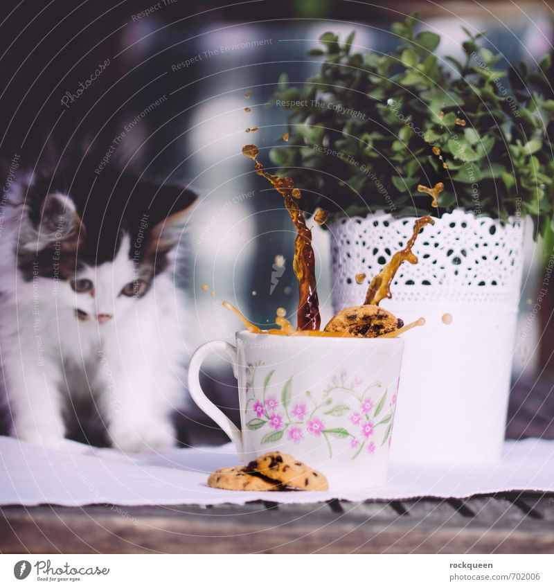 I wasn't! Dough Baked goods Breakfast To have a coffee Beverage Cup Mug Spring Summer Plant Bushes Foliage plant Garden Animal Pet Cat Pelt Paw 1 Baby animal