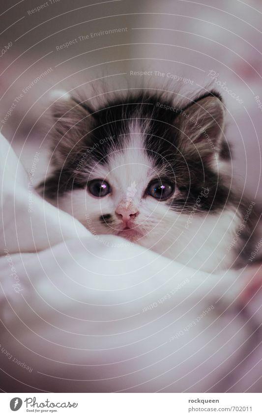 Heia Bubu Animal Pet Cat 1 Baby animal Observe Discover Illuminate Sleep Dream Esthetic Brash Glittering Bright Beautiful Small Cute Soft Violet Pink White