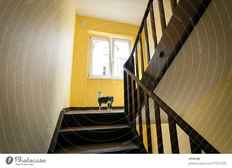 Cat Loneliness Animal Yellow Window Baby animal Interior design Cute Curiosity Discover Watchfulness Staircase (Hallway) Banister Pet Orientation