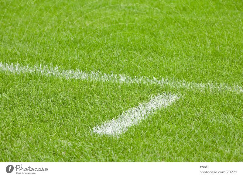 playing field Soccer player Line Green White Minimal Rugby Lawn Sports green lawn Joist Gate out goal Individual