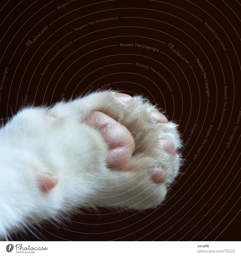 Wolfgang Paw Cat's paw Peace Pelt Sweet Claw Animal Pet Cute Black Soft Domestic cat Living thing Macro (Extreme close-up) Close-up Mammal white on black