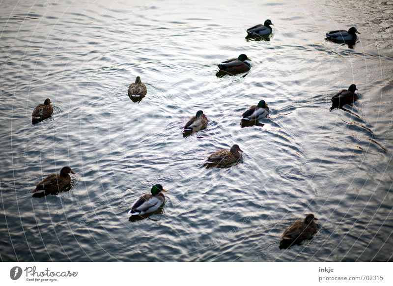 Nature Water Summer Animal Dark Emotions Autumn Spring Swimming & Bathing Lake Moody Together Waves Group of animals Attachment Duck