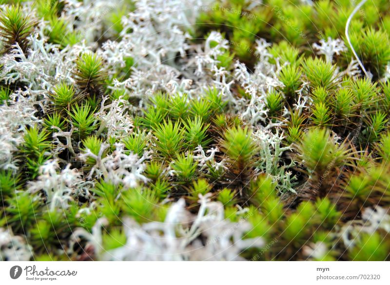 Nature Plant Loneliness Calm Winter Forest Environment Sadness Meadow Autumn Growth Esthetic Change Transience Moss Damp