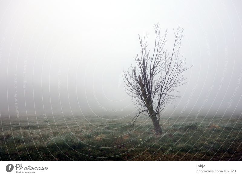 Nature Tree Loneliness Landscape Dark Cold Environment Meadow Autumn Spring Grass Moody Air Park Weather Field