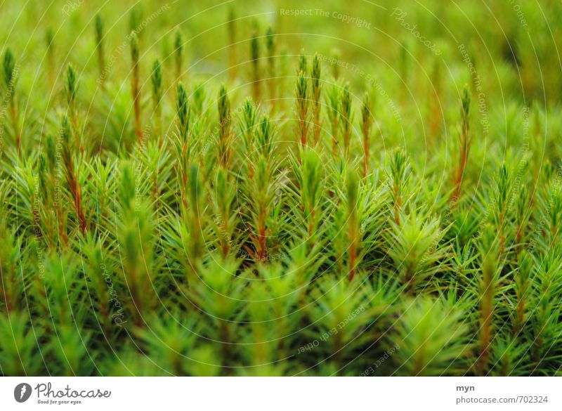 Nature Plant Green Calm Winter Forest Environment Sadness Meadow Autumn Grass Happy Esthetic Transience Environmental protection Moss