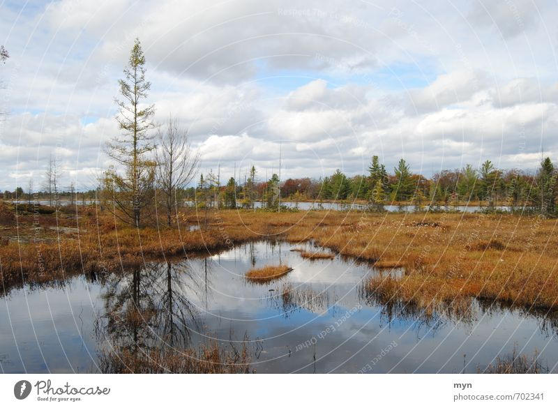 bog Environment Nature Landscape Plant Elements Earth Water Sky Clouds Autumn Winter Bad weather Rain Tree Bushes Moss Bog Marsh Pond Lake Transience Canada