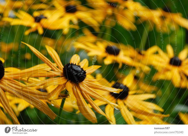 Flower Yellow Meadow Rain Honey