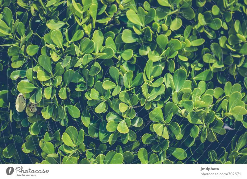 Nature Vacation & Travel Old Green Plant Leaf Dark Environment Spring Park Bushes Hiking Esthetic Fresh Observe Creepy