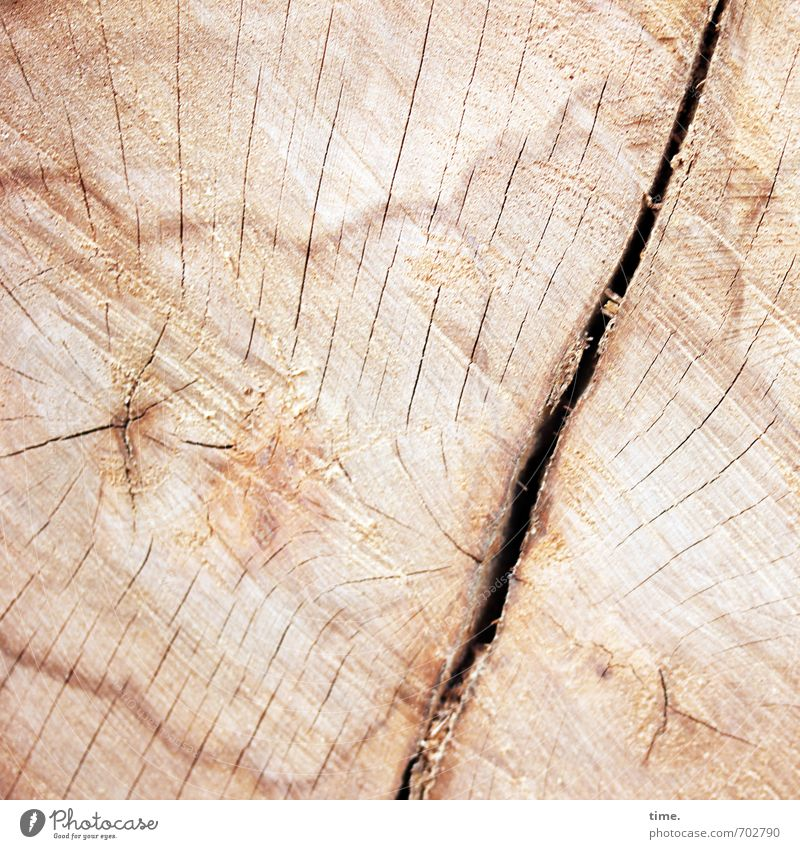 cut Environment Nature Tree Tree trunk Death of a tree felling wood Wood grain Furrow Crack & Rip & Tear Annual ring Beech tree Old Authentic Firm Natural Pain