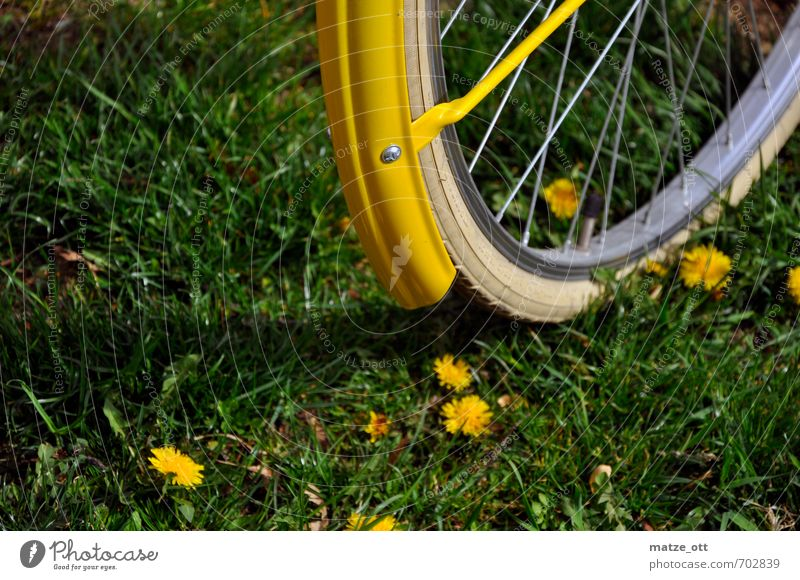 Nature Vacation & Travel Green Summer Flower Yellow Environment Meadow Movement Sports Grass Natural Leisure and hobbies Bicycle Trip Fitness
