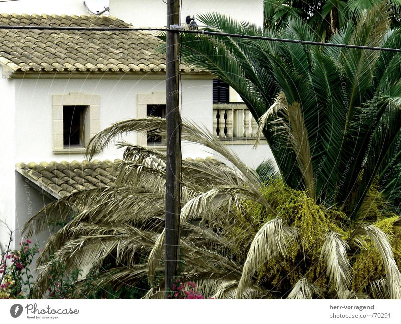 bisected House (Residential Structure) Balcony Electricity Electricity pylon Spain Bushes Window Majorca Gloomy Plant Transmission lines
