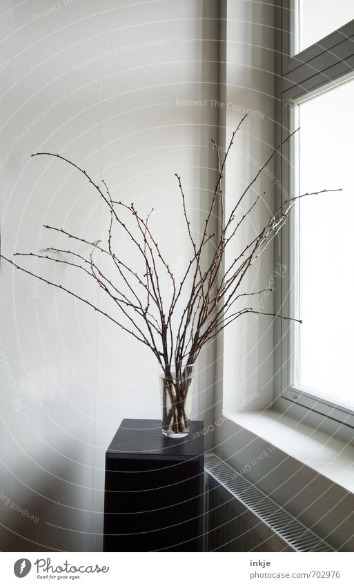 Something's missing. Lifestyle Style Living or residing Flat (apartment) Decoration Room Spring Twig Twigs and branches Deserted Window Vase Flower vase Wood