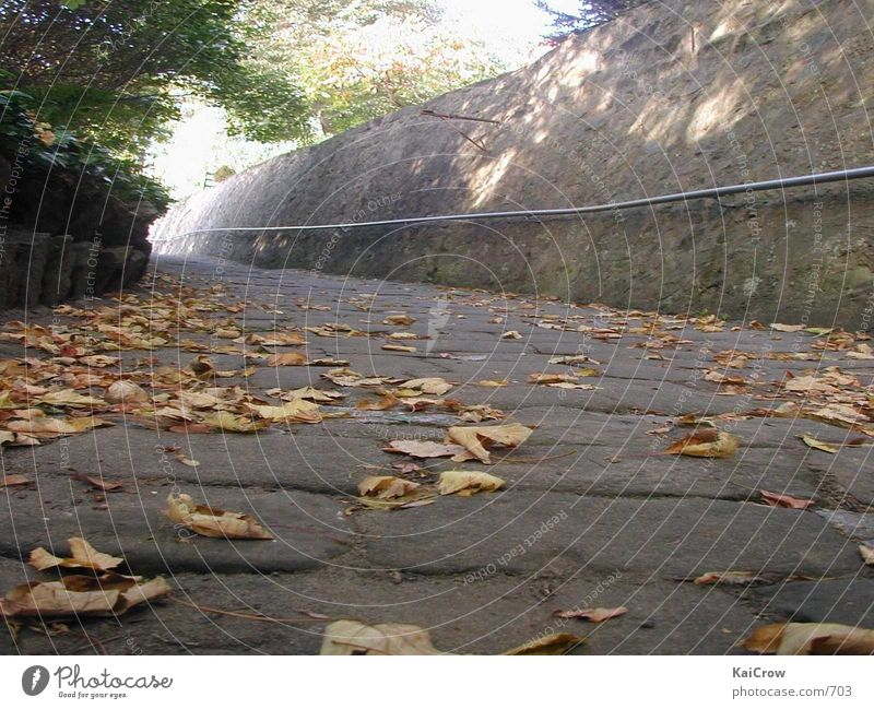 Autumn Lanes & trails Cobblestones