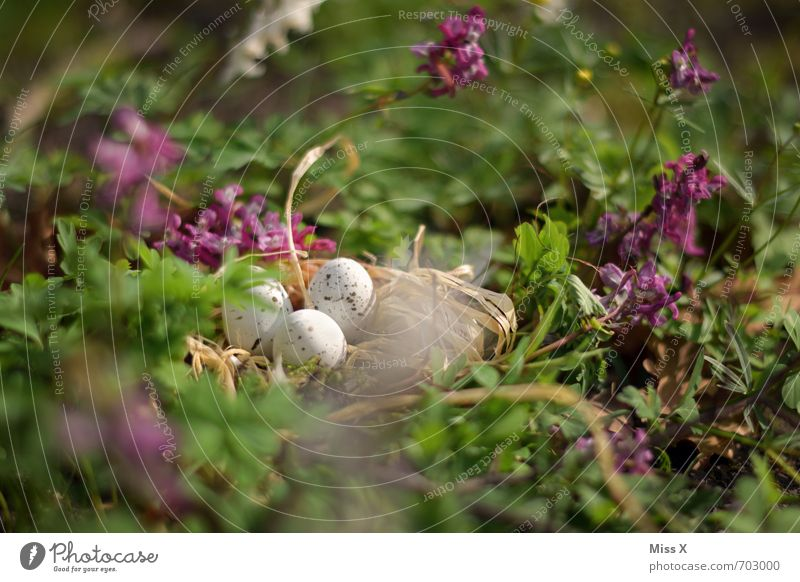 In the shade Easter Nature Spring Flower Grass Leaf Blossom Bird Baby animal Small Moody Protection Safety (feeling of) Warm-heartedness Easter egg nest Nest