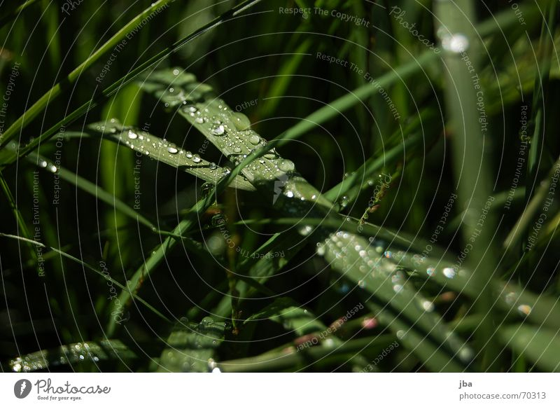 Green Summer Black Grass Wet Drops of water Dew Transparent