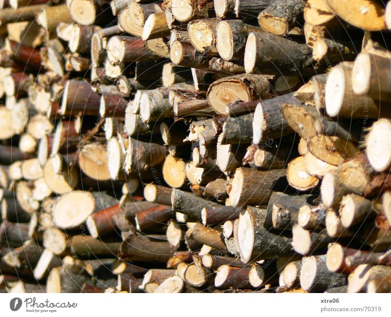 Wood in front of the hut Firewood Stack Brown Stack of wood Tree Tree trunk Heap Rural Pecking order Timber pile tree-branch sharpness-blurriness Branch