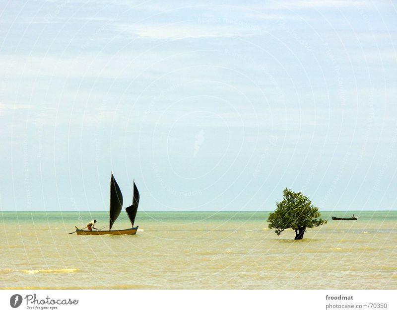 sailboat Sailboat Tree Ocean Watercraft Fisherman Brazil Beach Summer Minimal Sailing Sky High tide