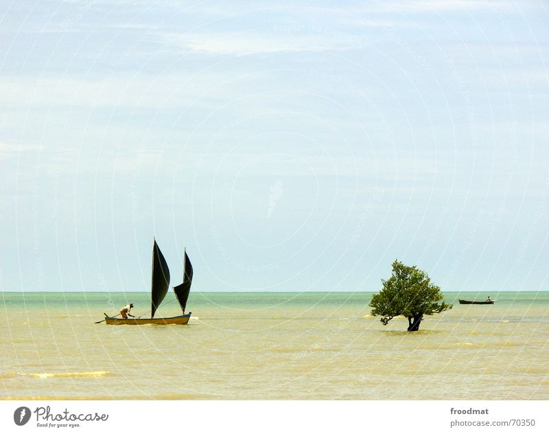 Sky Tree Ocean Summer Beach Watercraft Sailing Brazil Sailboat Fisherman Minimal High tide