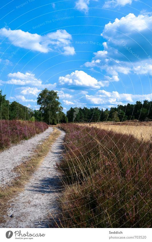 Lüneburg Heath - Büsenbach Valley Summer Hiking Environment Nature Landscape Earth Bushes Luneburg Heath Heathland northern heath Buchholz i. d. Nordheide