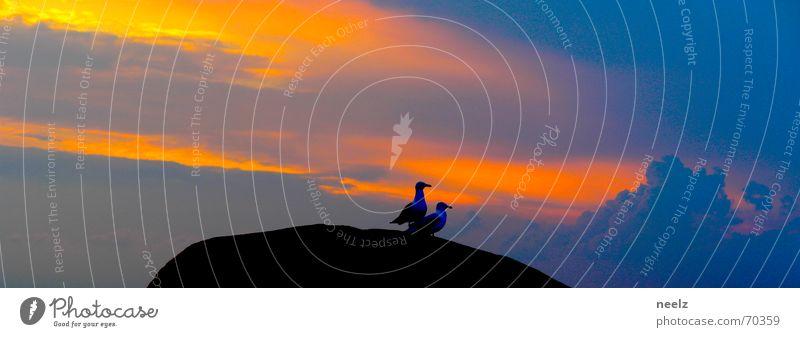 Sky Ocean Blue Animal Together Orange Rock Beginning Posture Target Kitsch Forwards Dusk Site Start position