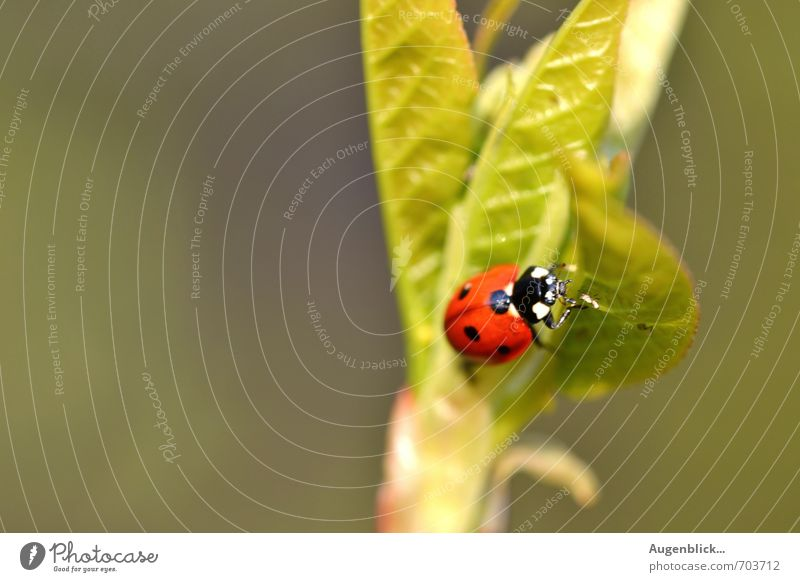 Green Beautiful Red Animal Healthy Happy Friendship Glittering Contentment Beetle Ladybird