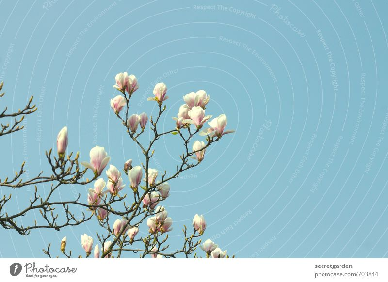 Nature Blue White Plant Tree Environment Warmth Spring Bushes Esthetic Fresh Change Blossoming Transience Cloudless sky Fragrance