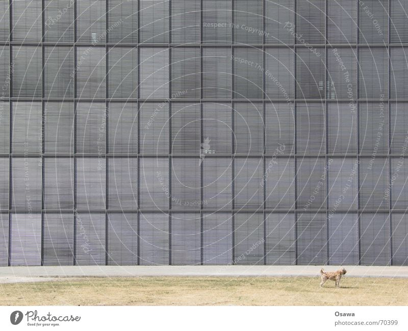House (Residential Structure) Window Building Dog Facade Grid Weather protection Seat of government